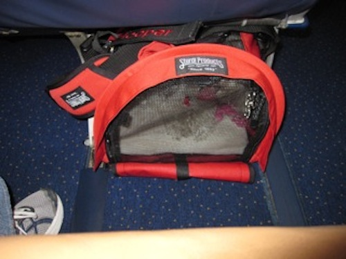 Tips From Dog Jaunt Readers Packing A Crate Improving